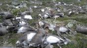 Rayos matan a más de 300 renos salvajes en Noruega