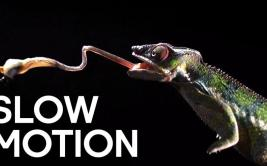 YouTube: los once videos más espectaculares en Slow Motion