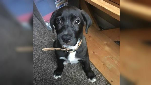 Un cachorro fue abandonado dentro de una bolsa en carretera