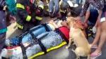 Perro llegó en auxilio de su dueño tras accidente de tránsito - Noticias de accidente de bus