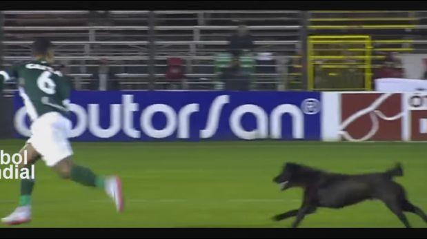 Brasil: perro invadió campo de juego en festejo y asustó a futbolista