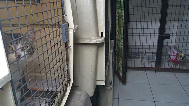 El albergue municipal de La Molina cuida de perros y gatos mientras les buscan hogares adoptivos.
