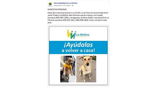 Las autoridades de la municipalidad se valen de las redes sociales para colocar mascotas perdidas y para promover sus animales en adopción.
