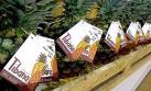 Productores del VRAEM inician exportaciones de piña a España