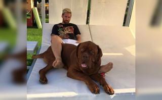 Lionel Messi se recupera junto a su dogo de Burdeos