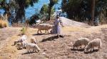 Conoce los 5 destinos más bonitos de todo Bolivia - Noticias de tomas rincon
