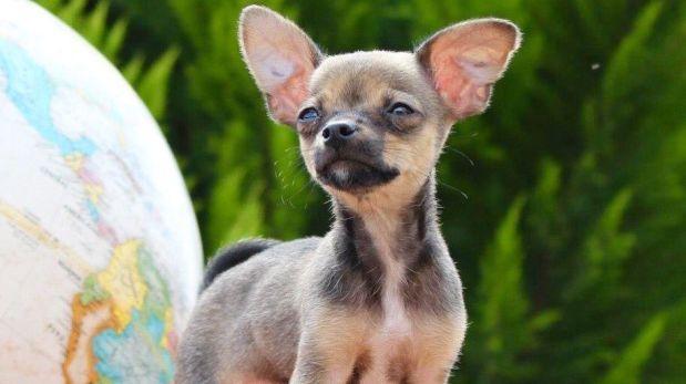 German lanza campaña en YouTube para hallar a su mascota Mimi