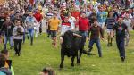España: Tordesillas celebra a su toro sin lidia ni muerte - Noticias de plaza castilla