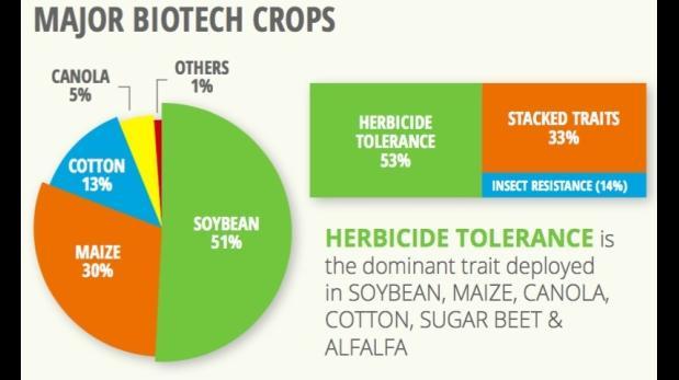 ¿Los transgénicos aumentan o reducen el uso pesticidas?