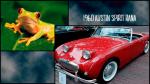 Diseño salvaje, 17 autos inspirados en animales - Noticias de chevrolet