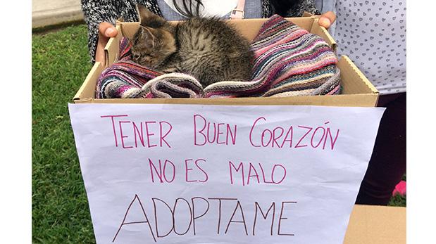[Foto] MINSA: Adoptar animales mejora la salud mental de las personas