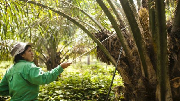 Industria de palma genera 37 mil puestos de trabajo al año