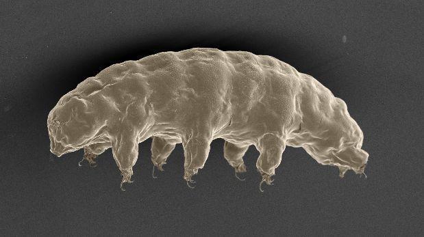 Estudian el ADN del animal más resistente del mundo