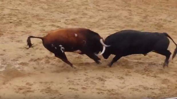 Toros mueren luego de brutal choque de cabezas [VIDEO]