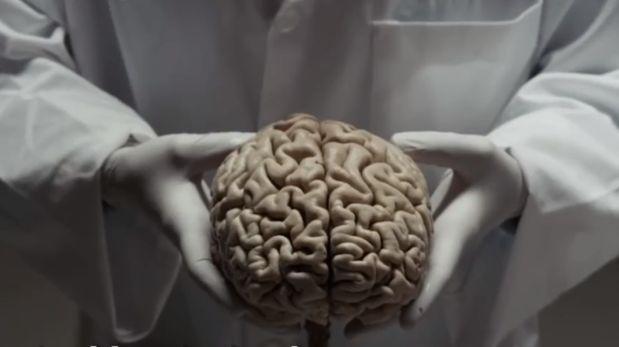 El cerebro humano por dentro y que es capaz de hacer [VIDEO]
