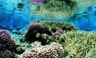 Los océanos tienen tres veces más tipos de virus de lo pensado