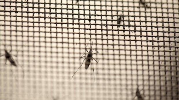 Zika: Tailandia preocupada por microcefalia en recién nacidos