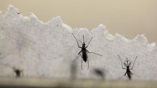 Zika: hombre enfermó por contacto con lágrimas de su padre