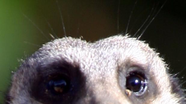 El mamífero más propenso a morir a manos de su propia especie