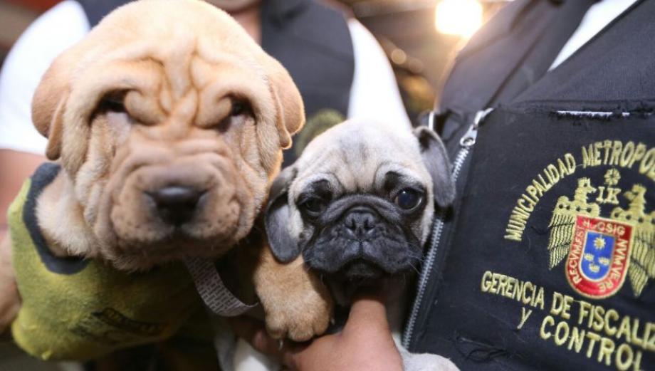 Rescatan a cachorros que iban a ser puestos a la venta [FOTOS]