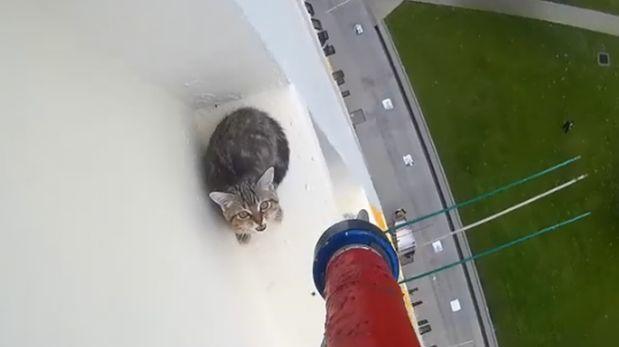 El tenso rescate de un gato atrapado en las alturas [VIDEO]