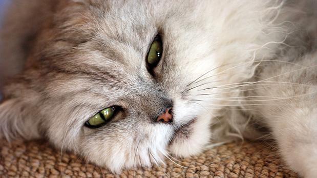 [Foto] Conoce a la gran enemiga de los gatos