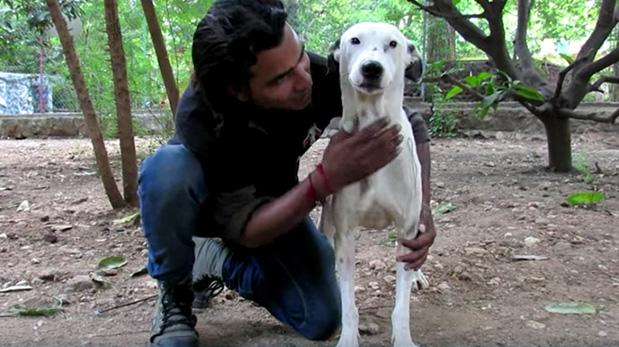[Foto] Hermosa recuperación de perro abandonado e inválido