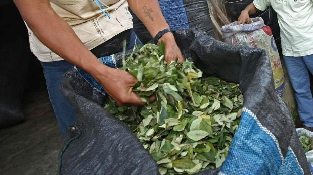 Extracto de coca puede reemplazar al azúcar en el chocolate