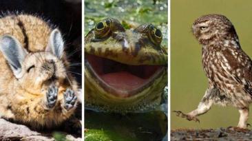 Graciosas fotos de animales salvajes podrían ganar un premio