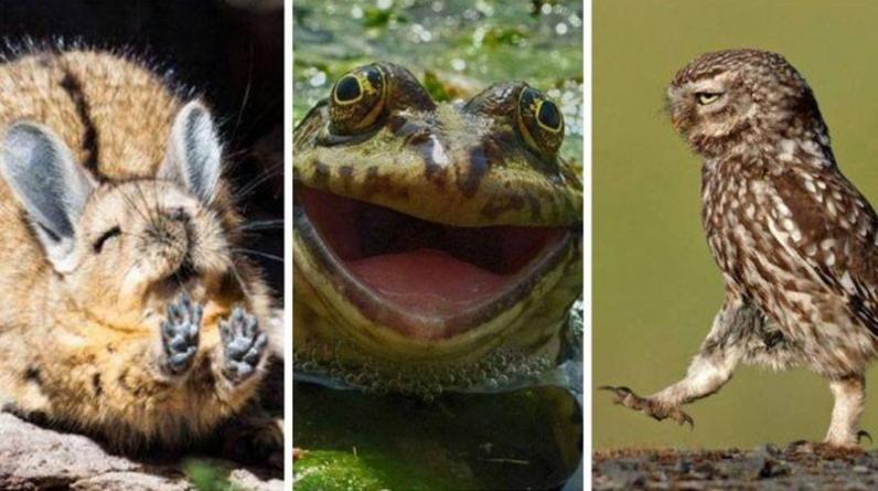 Conoce a algunos de los finalistas del concurso más gracioso del internet. (Foto captura: Facebook)