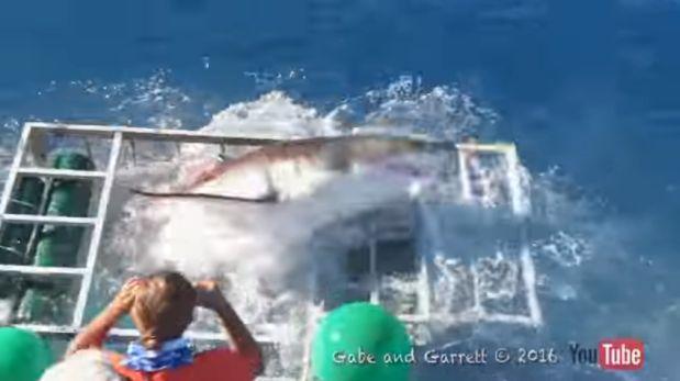 Quedó atrapado en una jaula con un tiburón y sobrevivió