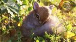 """Así puedes """"adoptar"""" animales fantásticos en Facebook - Noticias de johnny lee"""