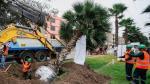 Los Olivos: municipalidad reubica 30 palmeras [FOTOS] - Noticias de contaminación ambiental