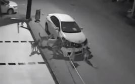 YouTube: jauría de perros destruyó parachoques de un auto