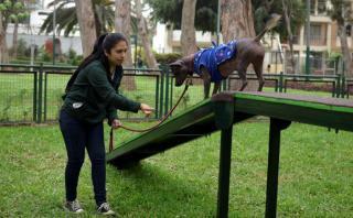 5 locales y espacios en Lima en los que tu perro es bienvenido