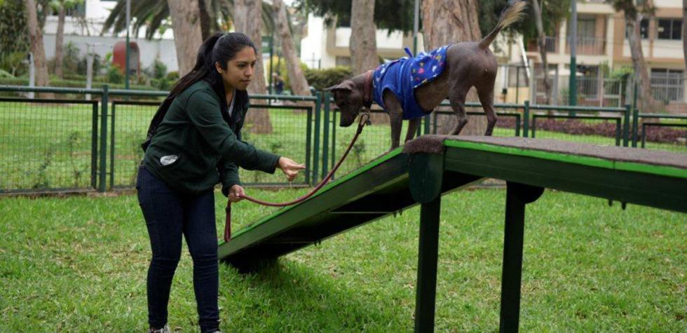 Locales en Lima en los que tu perro es bienvenido
