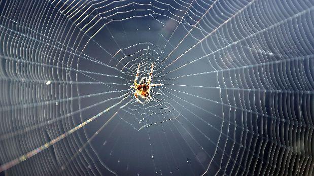 Arañas controlan la tensión de su tela para identificar presas