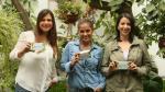 Emprendimiento Stevia Greenvía planea exportar a Latinoamérica - Noticias de supermercados wong