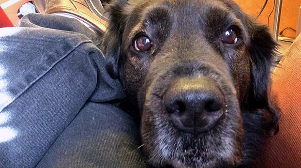 [Foto] 5 malas conductas incitadas por dueños de perros
