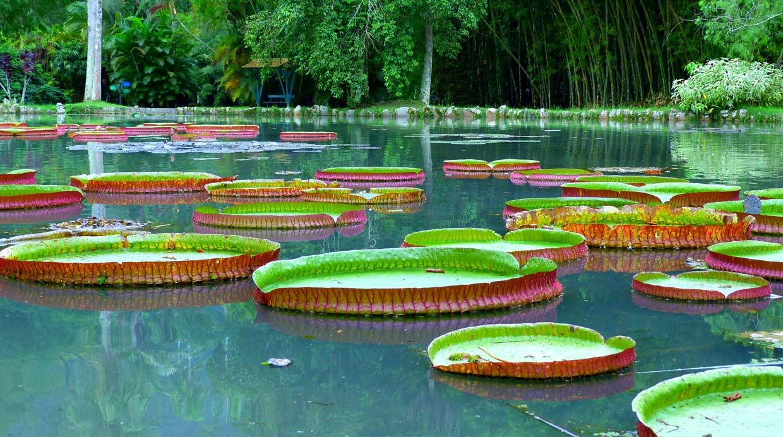 Belleza carioca recorre el jard n bot nico de r o de Jardin botanico horarios y precios