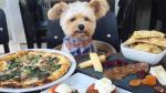 Conoce a Popeye, el perro 'gourmet' de Instagram [FOTOS] - Noticias de pet friendly