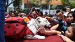 Las mascotas fueron la sensación en Halloween - Noticias de parque castilla