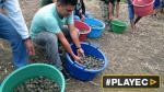 Liberaron 17 mil tortugas taricayas en la Amazonía [VIDEO] - Noticias de oso gris