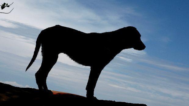 Uno de cada 5 perros mayores de 8 años tiene signos de demencia