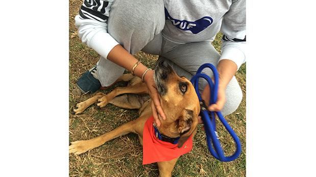 [Foto] WUF te acerca a perros que buscan hogar