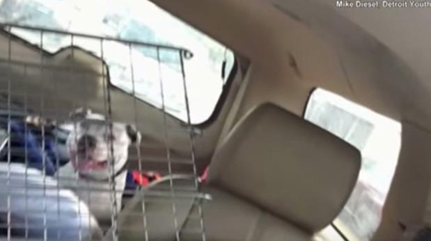 La primera vez que subieron a Boo a la camioneta rumbo a su nueva vida.