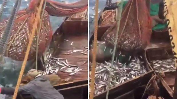YouTube: enorme animal apareció en red llena de pescados