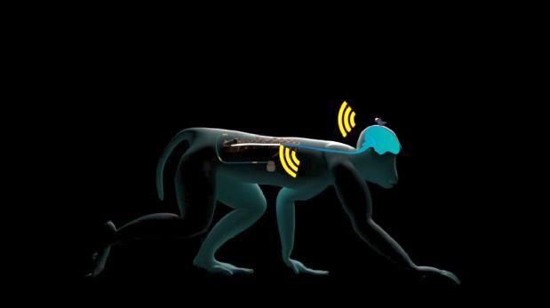 Monos recuperan el movimiento de miembros paralizados