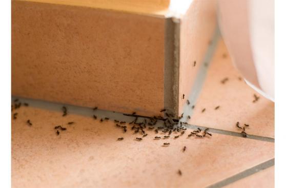 Café: Formas geniales de usarlo en el mantenimiento de tu casa