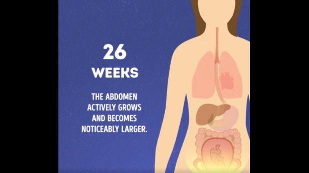 Cambios en el cuerpo de una mujer durante el embarazo [VIDEO]